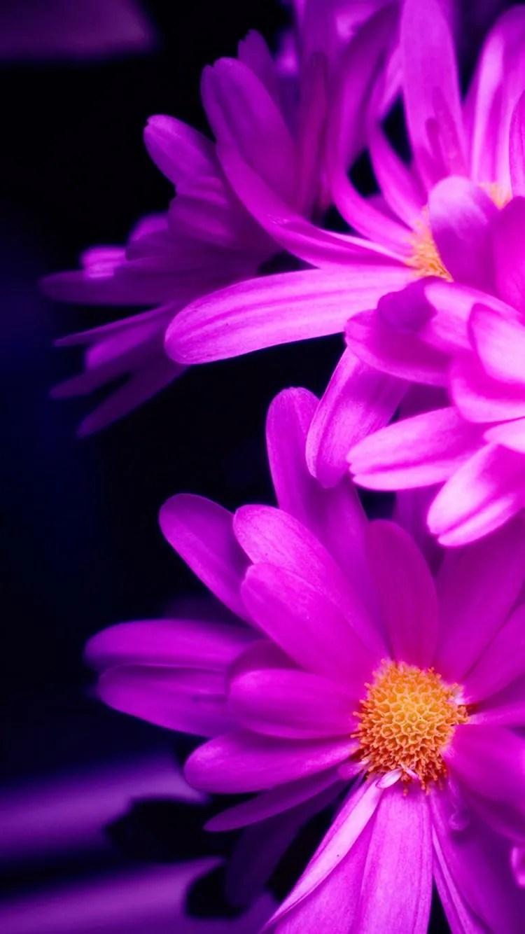 iPhone 7 flower wallpaper