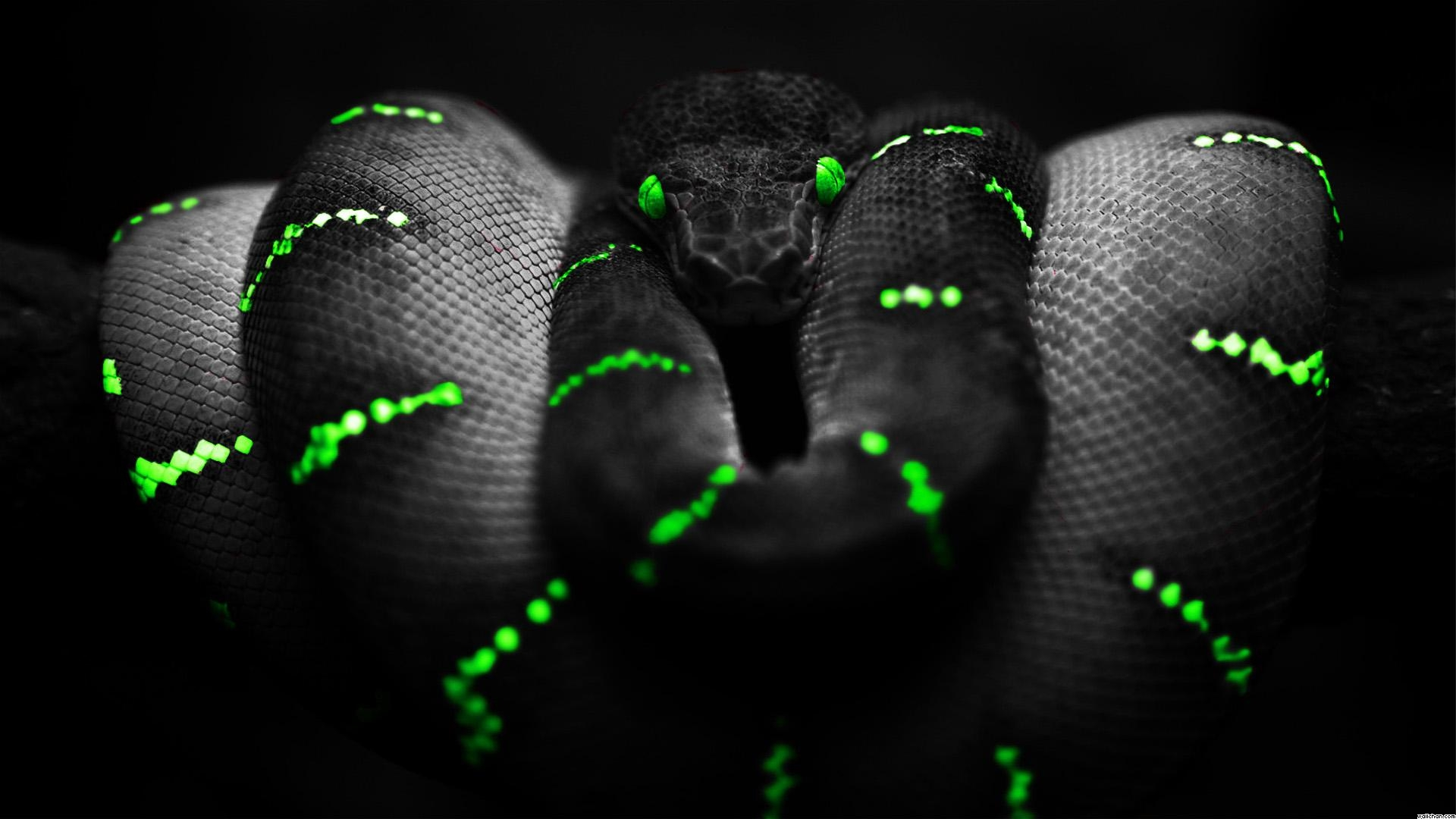 snake Black background