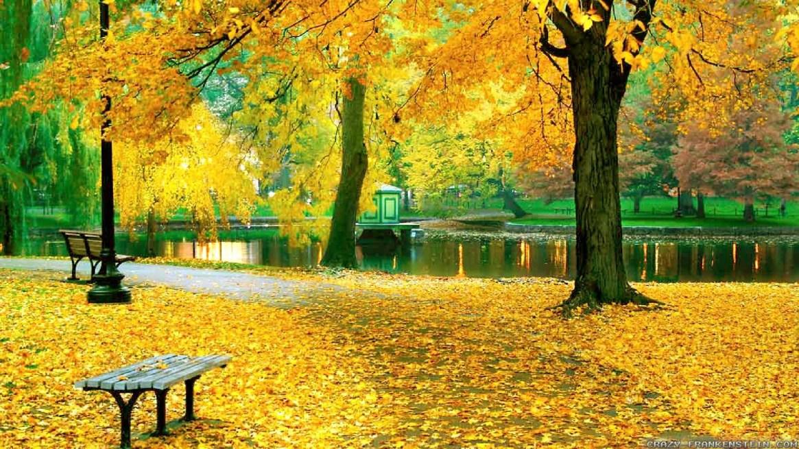 autumn-background-yellow