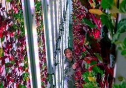 Dikey çiftlik topraksız üretim yapacak
