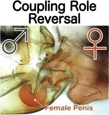 Role Reversal Abstract (Image Credit: science-direct)