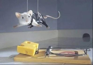 mouse bait