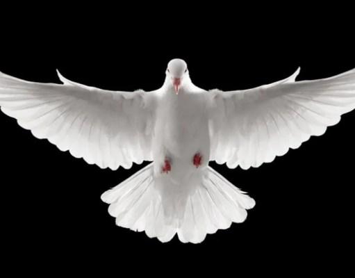 dove-story