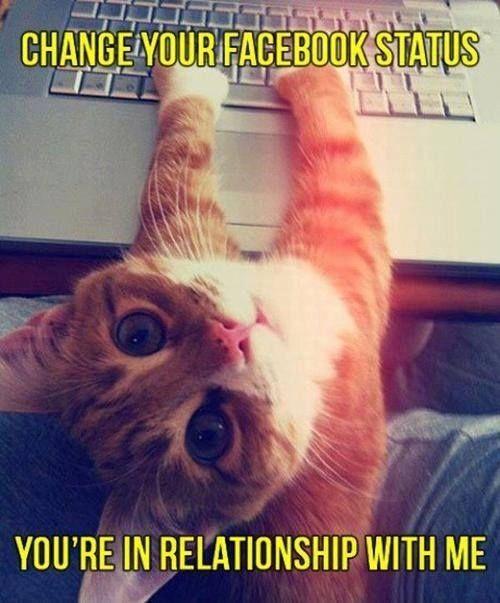red cat and facebook status