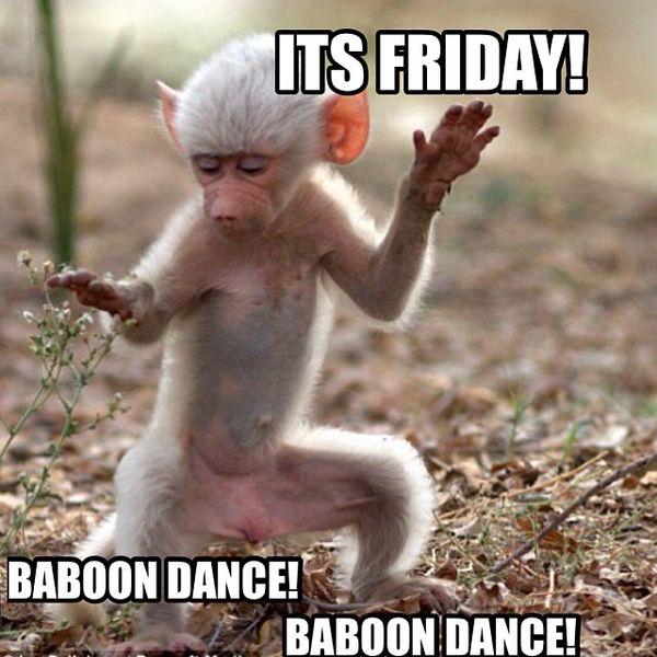 Его пятничный танец бабуина