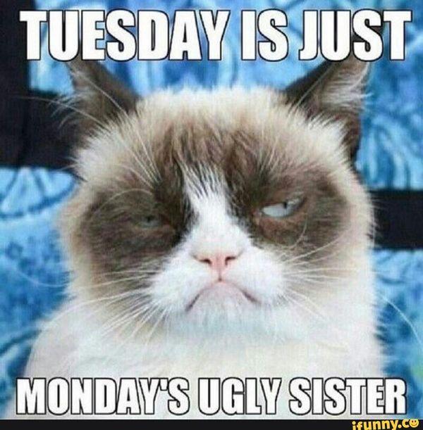 tuesday meme humor hilarious