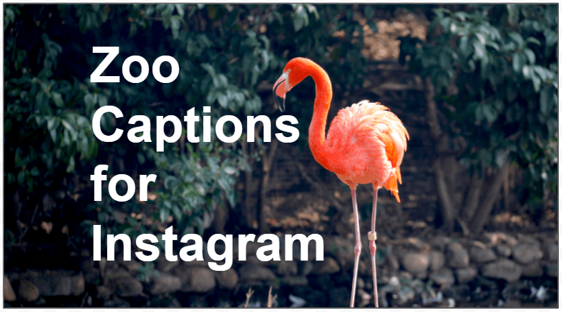 instagram captions for the zoo