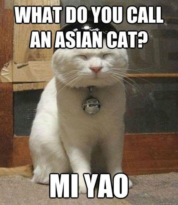 Fantastic funny asian cat