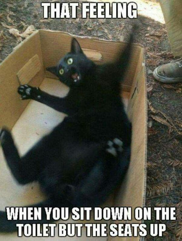 Incredibly funny memes about black cat