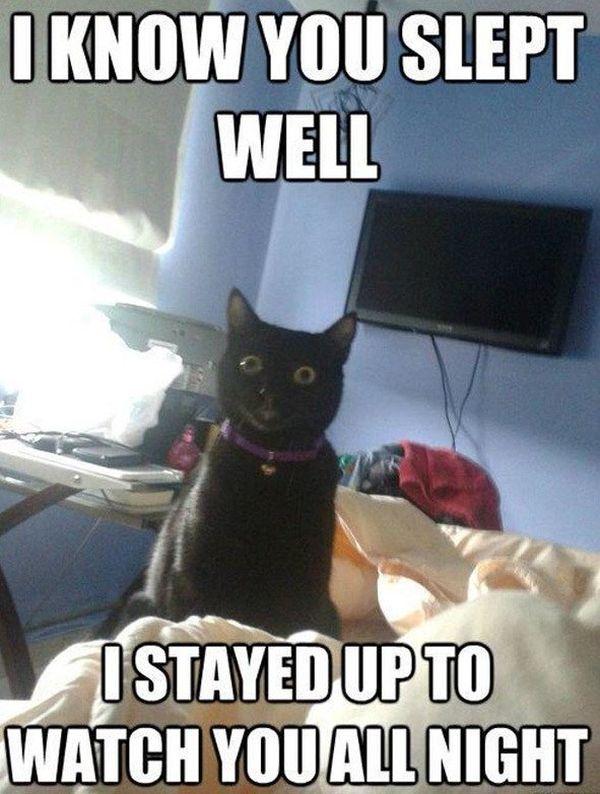Tasty funny black cat memes