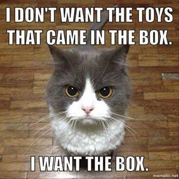 A mesmerizing meme about a funny kitten