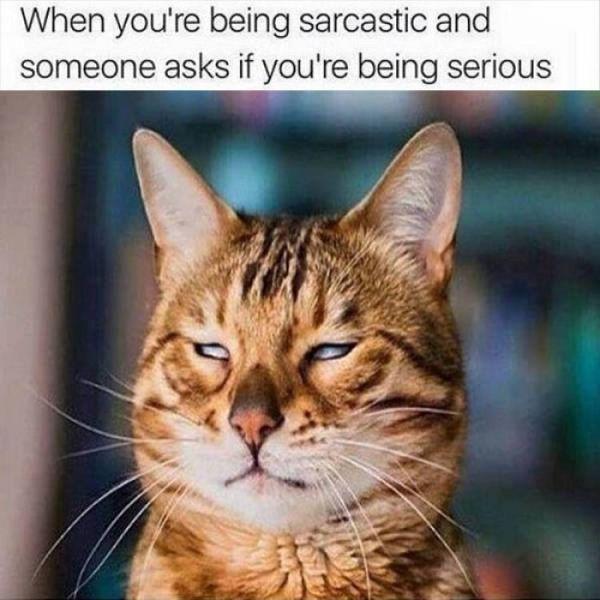 Sarcastic cat photos