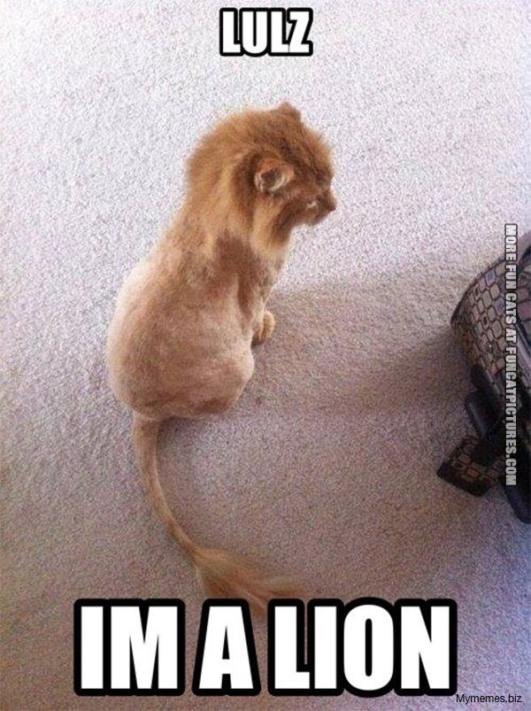 Shaved Cat Meme