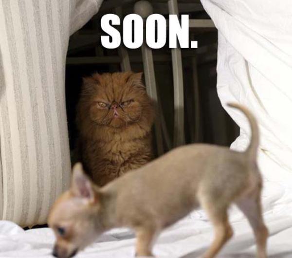 Soon Cat Meme