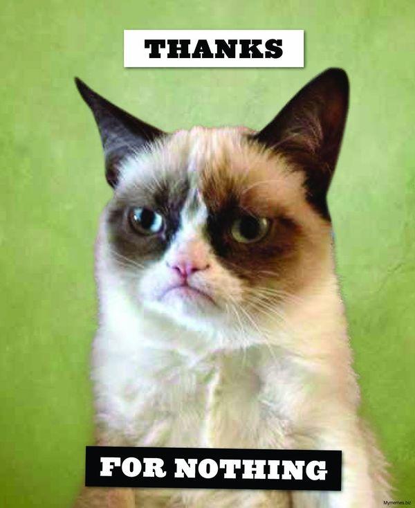 Thanks cat meme