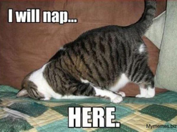 Tired cat meme