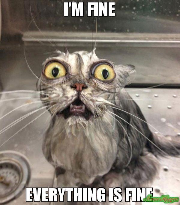 Wet Cat Meme
