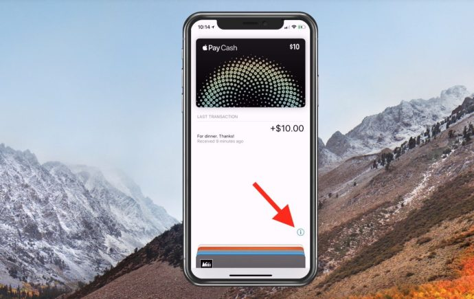 Apple Pay Cash Card Details Screen