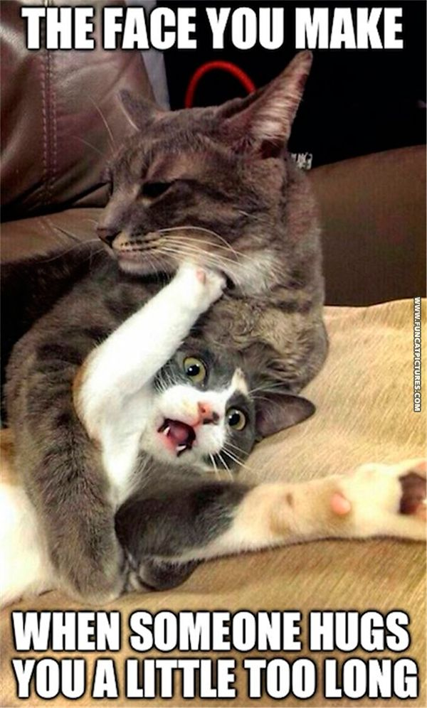 Magnificent funny hug images