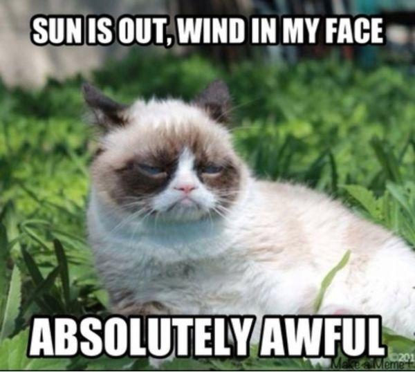 Wonderful grumpy face meme