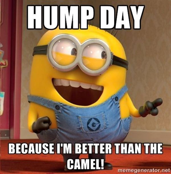 Nice Funny Hump Day Memes 5