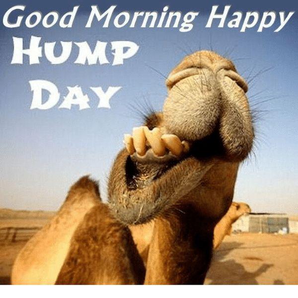 Good morning hump day memes 1