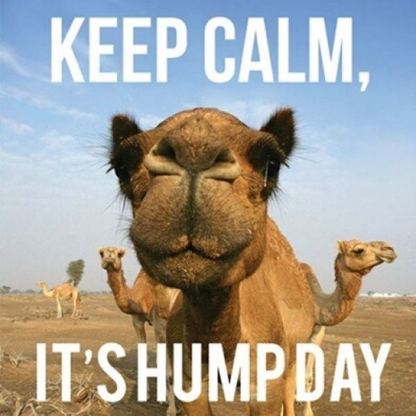 The Funniest Hump Day Images and Quotes 6