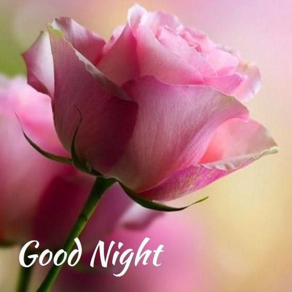 Полезные изображения спокойной ночи с красивыми цветами 2