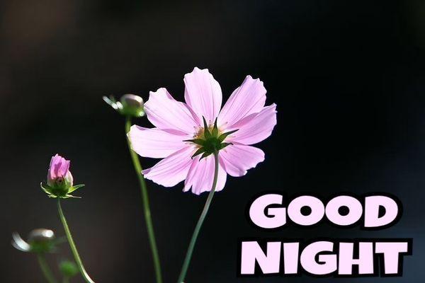 Полезные изображения спокойной ночи с красивыми цветами 3