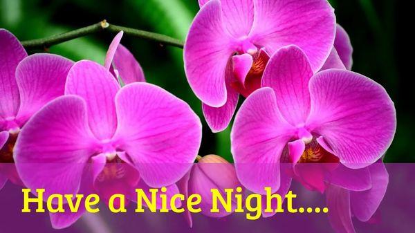 Полезные изображения спокойной ночи с красивыми цветами 6