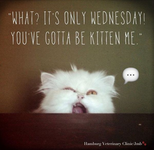 Wednesday quotes and pictures 2