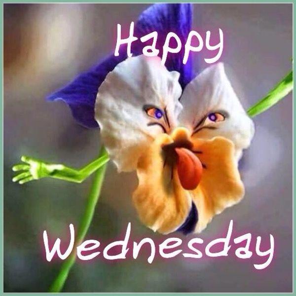 Happy Wednesday Meme 4