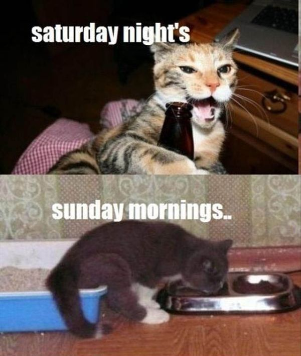 Saturday Memes Funny and Dirty 1