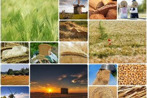 how to make a photo collage in a google slide