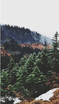 Misty mountain slopes