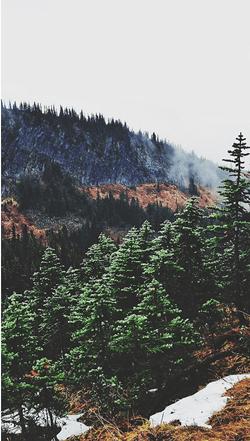 Foggy Mountain Slopes