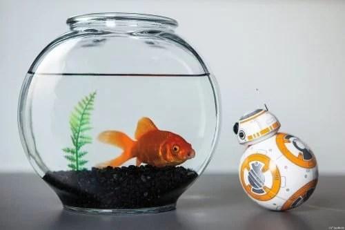 sphero-star-wars-bb-8-droid-06
