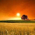 summer_sunset_2-wallpaper-1280×800