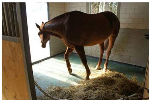tapis de boxes pour chevaux devis sur