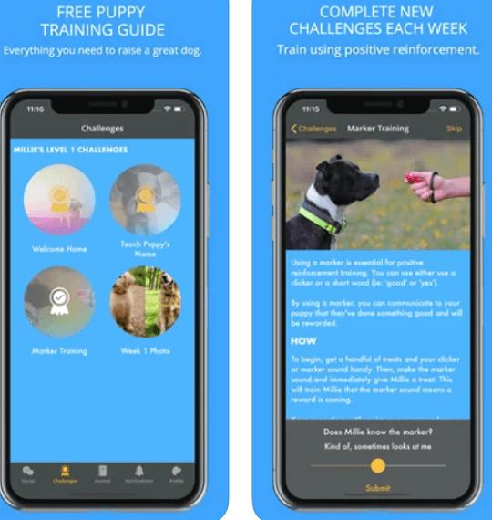 Social Puppy - training app