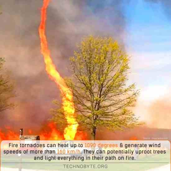 Fire tornadoes are fiery daredevils