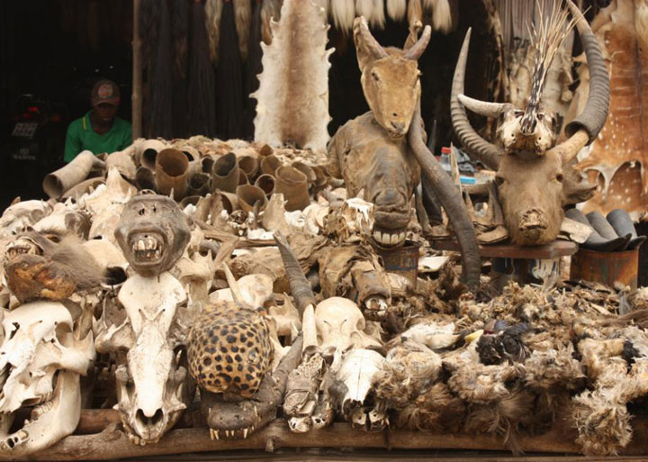 Akodessewa Fetish Market in Togo-The 10 Most Scary Places On The Earth-16