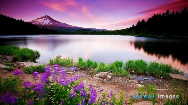 45 HD Beautiful Wallpapers/Backgrounds For Free Download