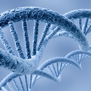 A strand of genome