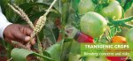 Transgenic Crops: Biosafety concerns and related risks
