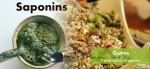 Saponins are bio-active and natural products