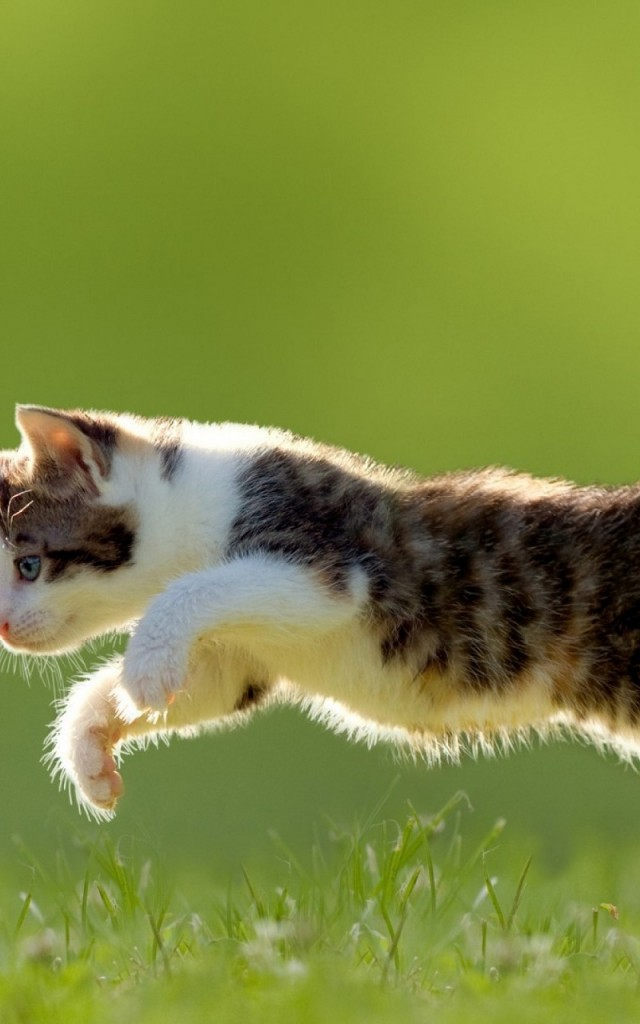 Jumping-Cat-background-picture