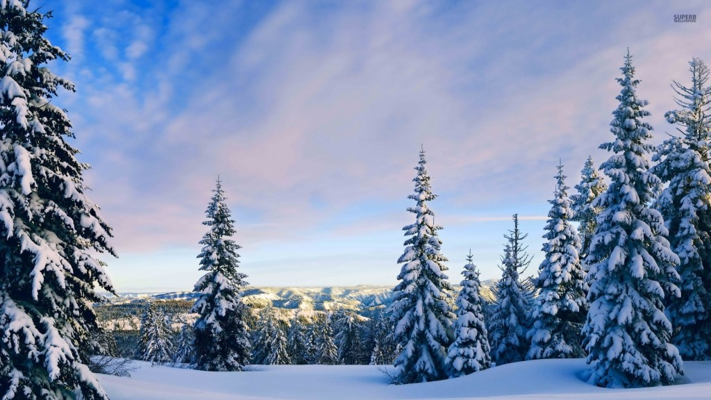 snowy-pine-trees-high-definition