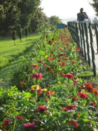 Shalimar garden flowers