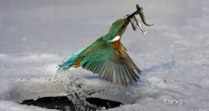 Best of Bing Kingfisher